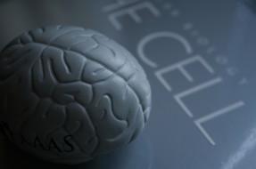 Huella digital - Cómo las nuevas tecnologías han alterado el funcionamiento de nuestro cerebro