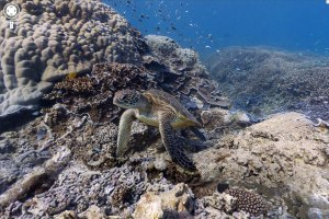 Huella digital - Google Maps incorpora el fondo del mar a sus panorámicas