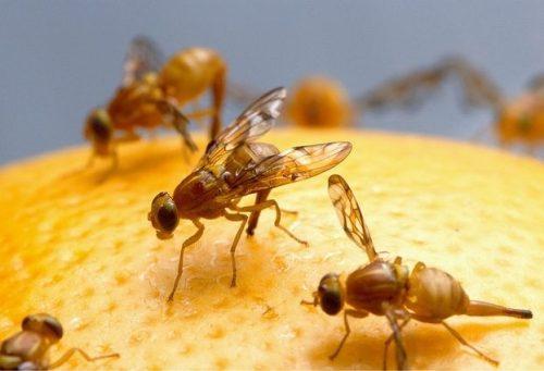 huella digital - El malware Fruitfly ha espiado a usuarios de Mac durante 13 años